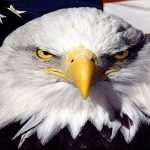 eagle_bird_on_flag